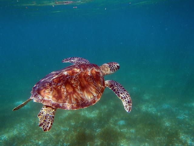 turtle green island