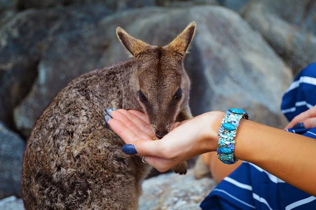 granite gorge rock wallaby
