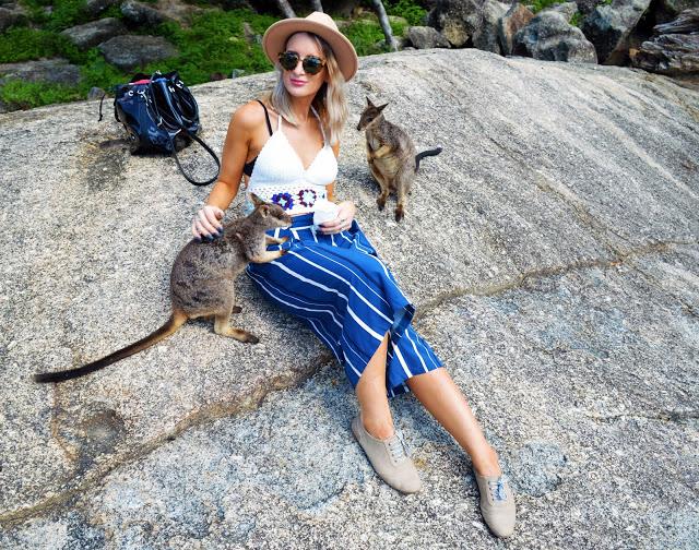feeding kangaroos travel australia