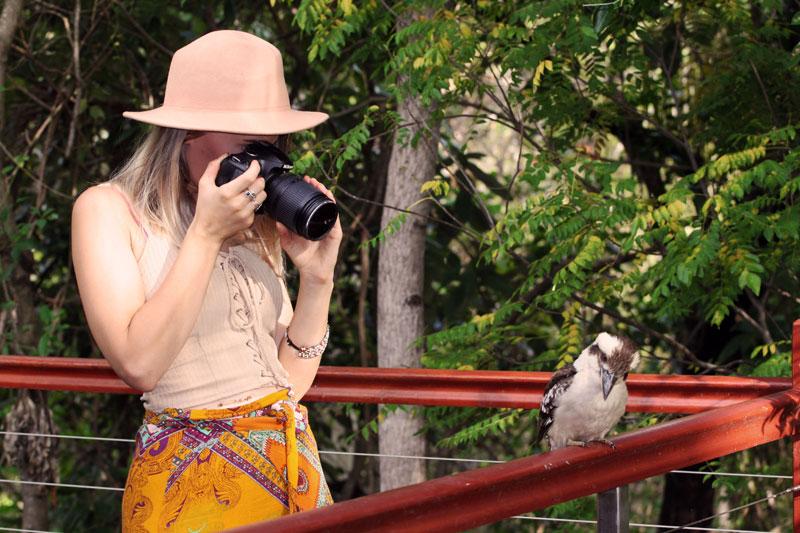 photographing wild kookaburra