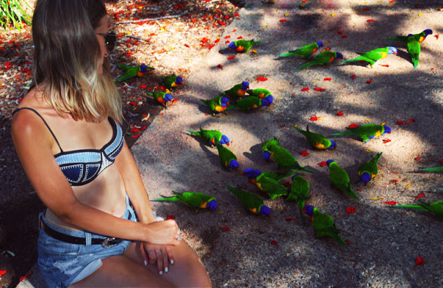 wild rainbow lorikeets magnetic island travel diary