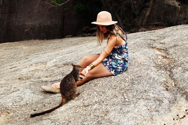 girl feeding wild rock wallabies